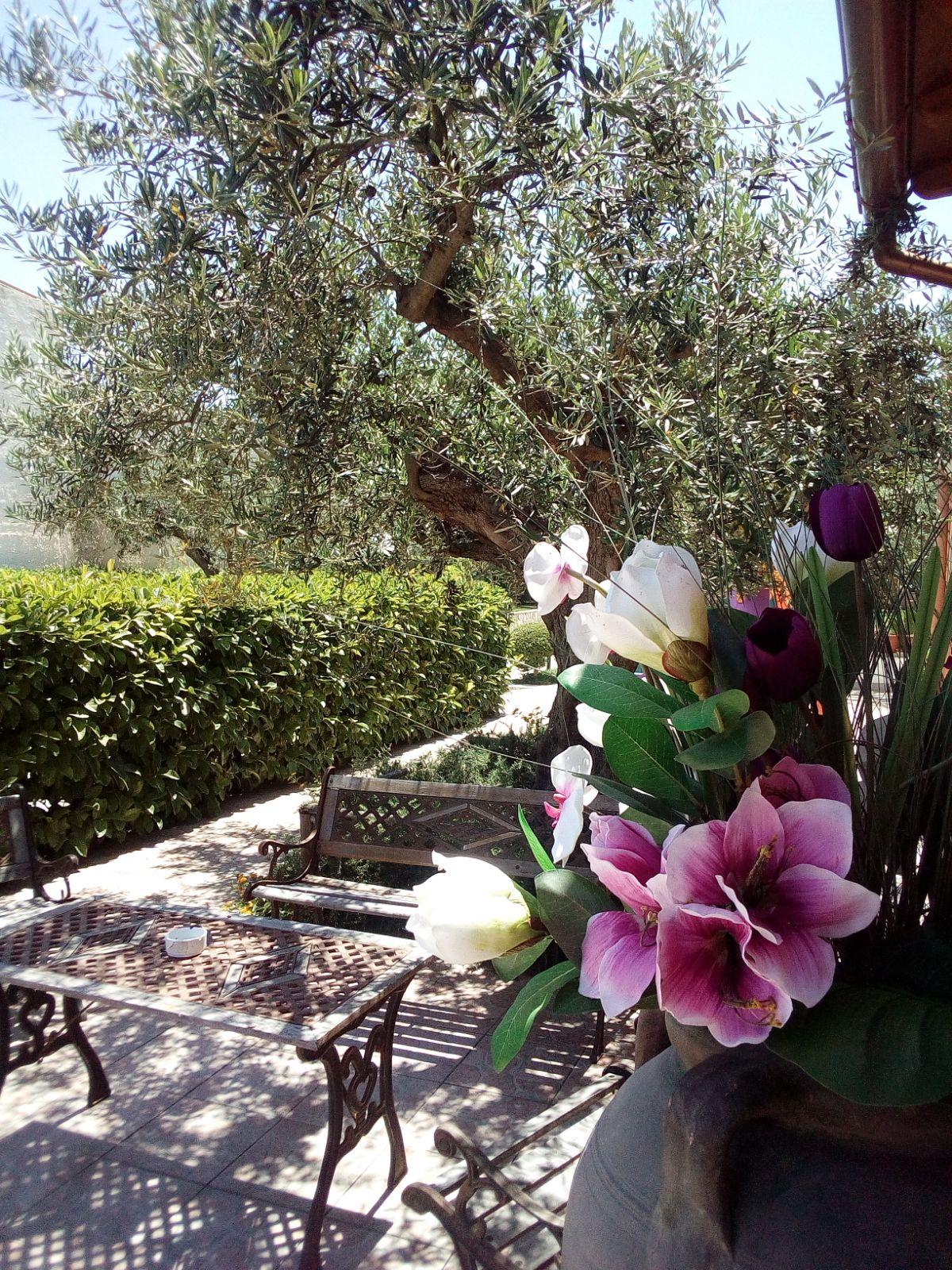 Villa_Plasi_Menfi_Ristorante_prato