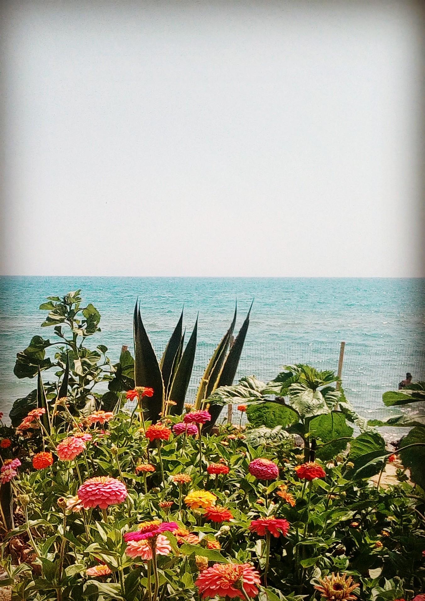 mare fiori 2